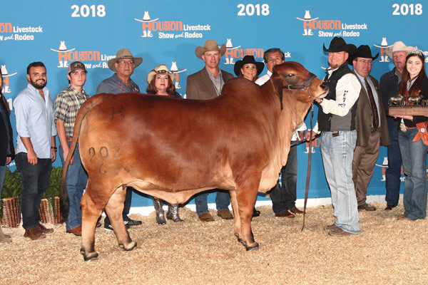 2018 International Reserve Grand Champion Lady H Aggie Rojo 902-6