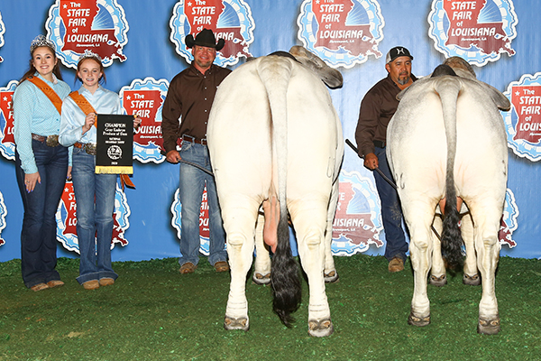 Mr H Pride of Maddox Manso 684/8 International Intermediate Grand Champion Gray Brahman Bull